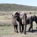 south africa, travel, diary
